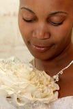 Pétalo de la novia foto de archivo libre de regalías