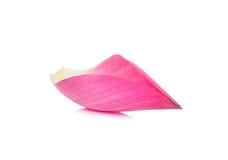 Pétalo de Lotus aislado en el fondo blanco foto de archivo libre de regalías