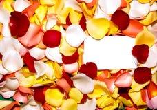 Pétalo de Rose 2 de saludo Fotografía de archivo libre de regalías