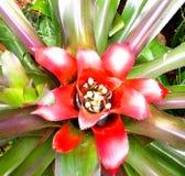 Pétalo rojo de la fragilidad de la flor de la hoja Imagenes de archivo