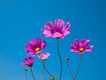 Pétalo rosado de la flor Imagen de archivo libre de regalías