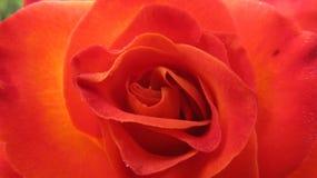 pétalos Foto de archivo libre de regalías
