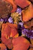 Pétalos Imagen de archivo libre de regalías
