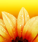 Pétalos abstractos de la flor Fotos de archivo
