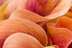 Pétalos abstractos de la flor Fotos de archivo libres de regalías