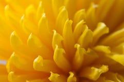 Pétalos amarillos foto de archivo libre de regalías