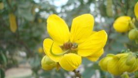 Pétalos amarillos Imagen de archivo