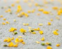 Pétalos amarillos de la flor Imágenes de archivo libres de regalías