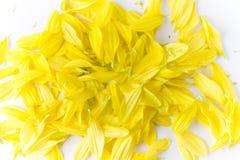 Pétalos amarillos de la flor Fotos de archivo libres de regalías
