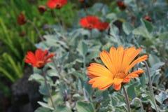Pétalos anaranjados imagen de archivo libre de regalías