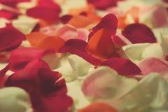 pétalos color de rosa Foto de archivo
