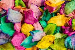 pétalos color de rosa Imagen de archivo