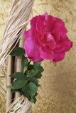pétalos color de rosa Imagenes de archivo