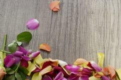 pétalos color de rosa Imagen de archivo libre de regalías