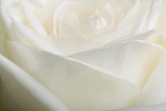 Pétalos color de rosa blancos Fotografía de archivo