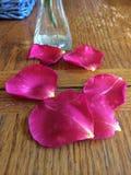Pétalos color de rosa caidos Fotografía de archivo