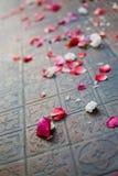 Pétalos color de rosa caidos Imagen de archivo