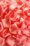 Pétalos color de rosa hermosos imagen de archivo