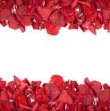 Pétalos color de rosa rojos Fotos de archivo libres de regalías