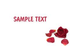 Pétalos color de rosa rojos Fotografía de archivo libre de regalías