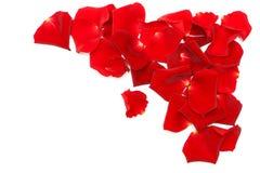 Pétalos color de rosa rojos aislados en blanco Fotografía de archivo