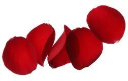 Pétalos color de rosa rojos aislados en el fondo blanco foto de archivo