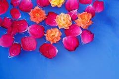 Pétalos color de rosa rojos en agua con las rosas amarillas un fondo hermoso imagenes de archivo