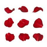 Pétalos color de rosa rojos en blanco stock de ilustración