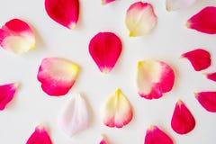 Pétalos color de rosa rojos en blanco imagenes de archivo