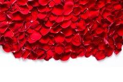 Pétalos color de rosa rojos en el fondo blanco Fotografía de archivo