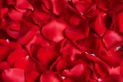 Pétalos color de rosa rojos hermosos como fondo fotografía de archivo