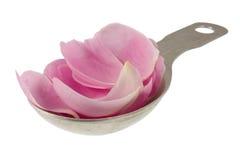Pétalos color de rosa rosados en cuchara de sopa de medición Imágenes de archivo libres de regalías