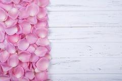 Pétalos color de rosa rosados en el fondo de madera blanco con el espacio de la copia Fotografía de archivo libre de regalías