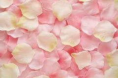 Pétalos color de rosa suavemente del rosa y blancos Fotos de archivo