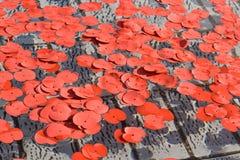 Pétalos de la amapola durante silencio en el acontecimiento cuadrado Fotografía de archivo libre de regalías