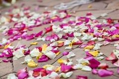 Pétalos de la boda Imagen de archivo