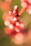 Pétalos de la flor Imagen de archivo libre de regalías