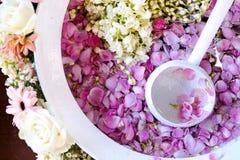 Pétalos de la flor foto de archivo libre de regalías
