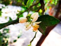 Pétalos de la flor blanca fotos de archivo libres de regalías