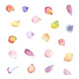 Pétalos de la flor de la acuarela Fotos de archivo libres de regalías