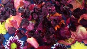 Pétalos de la flor en el agua almacen de metraje de vídeo