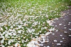 Pétalos de la flor en hierba verde Fotografía de archivo libre de regalías