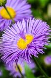 Pétalos de la fuente en la base de la flor Imágenes de archivo libres de regalías
