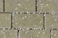Pétalos de la primavera Imagen de archivo libre de regalías