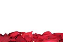 Pétalos de rosas rojas el día de la tarjeta del día de San Valentín y de madres con el copyspac Fotos de archivo libres de regalías