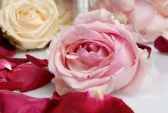 Pétalos de rosas rosadas y blancas hermosos románticos con la vela Imagen de archivo
