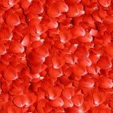 Pétalos de Rose Foto de archivo libre de regalías