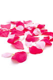 Pétalos de Rose Fotos de archivo