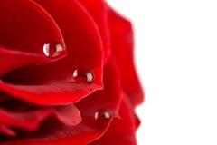 Pétalos de Rose con gotas del agua Fotografía de archivo libre de regalías