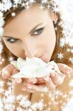 Pétalos de Rose con los copos de nieve #2 Foto de archivo